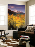Aspen Tree, Snowcapped Mountain, San Juan National Forest, Colorado, USA Wall Mural by Stuart Westmorland