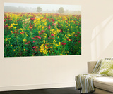 Late Summer Field of Ironweed, Sneezeweed and Yarrow Flower, Kentucky, USA Wall Mural by Adam Jones