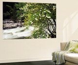 Pacific Dogwood Tree, Merced River, Yosemite National Park, California, USA Wall Mural by Adam Jones