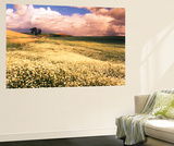 Oxeye Daises, Oak Tree, Palouse, Washington State, USA Wall Mural by Stuart Westmorland