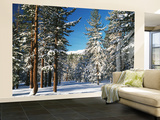Jeffrey Pine Covered with Snow, Inyo National Forest, California, USA Wall Mural – Large by Adam Jones