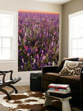Delphinium Field on Willamette Valley, Oregon, USA Wall Mural by Stuart Westmorland