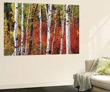 Trees in Autumn, Black Hill Area, Custer State Park, South Dakota, USA Wall Mural by Walter Bibikow