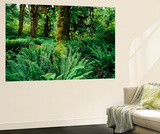View of Clubmoss, Hoh Rainforest, Olympic National Park, Washington State, USA Wall Mural by Stuart Westmorland