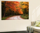 Road Through Autumn Trees, Green Mountain National Forest, Vermont, USA Wall Mural by Adam Jones