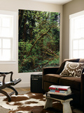 View of Rainforest, Olympic National Park, Washington State, USA Wall Mural by Paul Souders