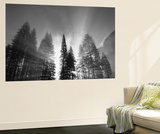 Sunlight Through Pine Forest in Yosemite Valley, Yosemite National Park, California, USA Wall Mural by Adam Jones