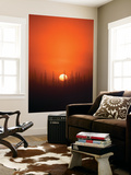 View of Sunrise over Spruces Trees, Fairbanks, Alaska, USA Wall Mural by Hugh Rose