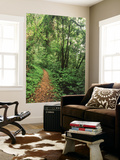 Quinault Rainforest, Olympic National Park, Washington State, USA Wall Mural by Stuart Westmorland