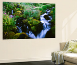 View of Waterfall in Forest, Oregon, USA Wall Mural by Stuart Westmorland