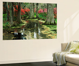 View of Azaleas and Cypresses Magnolia Plantation, Charleston, South Carolina, USA Wall Mural by Adam Jones