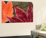 Frosted Maple Leaves, Oregon, USA Wall Mural by Stuart Westmorland