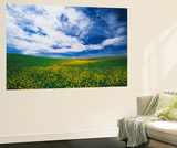 View of Wild Mustard Flowers Field, Washington, USA Prints by Adam Jones