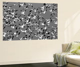 Snow Geese Bird, Bosque Del Apache National Wildlife Refuge, New Mexico, USA Posters af Hugh Rose