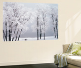 Beach, Hoar Frost on Cottonwoods During Winter, Bear Lake, Rendezvous, Utah, USA Plakater af Scott T. Smith