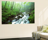 View of Cove Creek Covered with Fog, Pisgah National Forest, North Carolina, USA Wall Mural by Adam Jones