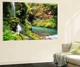 Old-Growth Rainforest, Graves Creek Tributary, Olympic National Park, Washington State, USA Wall Mural by Stuart Westmorland