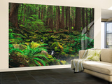 Rainforest, Mossy Rocks, Mt Rainier National Park, Washington, USA Wall Mural – Large by Stuart Westmorland