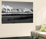 View of Teton Range at Dawn, Grand Teton National Park, Wyoming, USA Kunst af Paul Souders