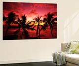 View Palm Trees on Beach, Big Islands, Kona, Hawaii, USA Wall Mural by Stuart Westmorland