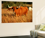 Longhorn Bull Wildlife, Oklahoma, USA Print by David Barnes