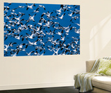 Snow Geese Bird, Bosque Del Apache National Wildlife Refuge, New Mexico, USA Wall Mural by Hugh Rose