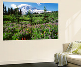 Subalpine Meadow, Mount Rainier National Park, Washington, USA Plakat af Adam Jones