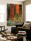 Giant Sequoias, Yosemite National Park, California, USA Wall Mural by Adam Jones