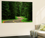 Road Through Forest, Olympic National Park, Washington, USA Posters af Adam Jones