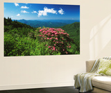 Catawba Rhododendrons, Blue Ridge Parkway, Pisgah National Forest, North Carolina, USA Poster af Adam Jones