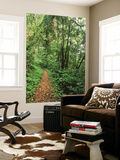 Quinault Rainforest, Olympic National Park, Washington State, USA Posters by Stuart Westmorland
