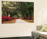 Road Lined with Azaleas and Live Oaks, Spanish Moss, Savannah, Georgia, USA Plakater af Adam Jones