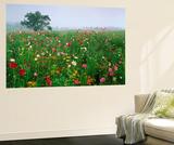 Field of Cosmos Flower, Union, Kentucky, USA Kunst af Adam Jones
