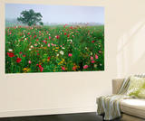 Field of Cosmos Flower, Union, Kentucky, USA Art by Adam Jones