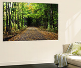 South Albany, View of Country Road, Northeast Kingdom, Vermont, USA Posters af Walter Bibikow