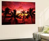 View Palm Trees on Beach, Big Islands, Kona, Hawaii, USA ポスター : スチュアート・ウエストモアランド