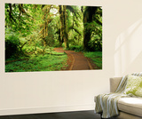 Clubmoss, Hoh Rainforest, Olympic National Park, Washington State, USA Plakat af Stuart Westmorland