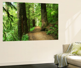 Path Through Old-Growth Forest, Columbia River Gorge, Oregon, USA Prints by Adam Jones