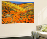 California Golden Poppy Flower at Tehachapi Mountains, California, USA Prints by Stuart Westmorland