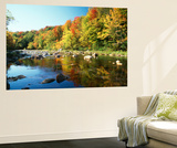 Autumn Trees Reflected in Deerfield River, Vermont, USA Posters by Adam Jones