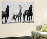 Wild Stallion Horses, Alkali Creek, Cyclone Rim, Continental Divide, Wyoming, USA Posters by Scott T. Smith