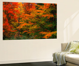 View of Autumn Forest, Vermont, USA Plakater af Walter Bibikow
