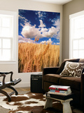 View of Wheat Field, Palouse, Washington State, USA Posters af Stuart Westmorland