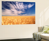 Clouds over Wheat Field Agriculture Posters af Stuart Westmorland