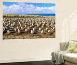 Bird, King Cormorant or Imperial Shag, Colony on Bleaker Island, Falkland Islands Prints by Martin Zwick