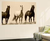 Wild Stallion Horses, Alkali Creek, Cyclone Rim, Continental Divide, Wyoming, USA Plakater af Scott T. Smith