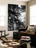 Sunbeam Passing Through Trees, Olympic National Park, Washington State, USA Kunst af Adam Jones