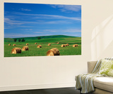 Hay Bales, Palouse Farm Country, Washington, USA Posters af Adam Jones