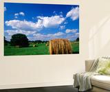 View of Hay Bales in Farm Field, Lexington, Kentucky, USA Plakat af Adam Jones