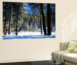 Jeffrey Pine Covered with Snow, Inyo National Forest, California, USA Plakater af Adam Jones